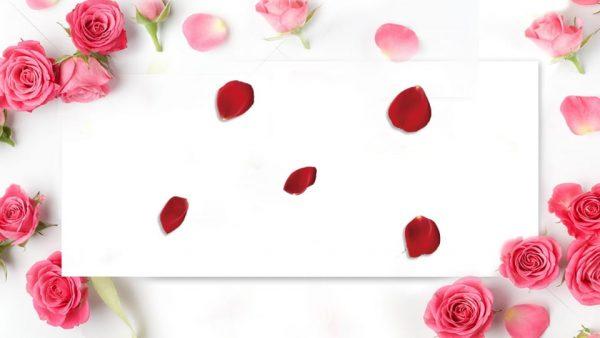 Bouquet Rose Petal Flower Background (Turbo Premium Space)