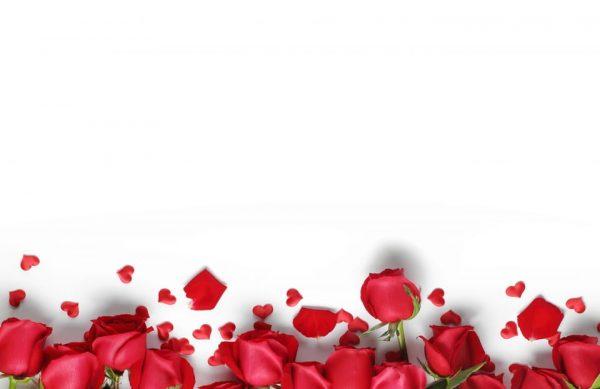Red Roses Background (Turbo Premium Space)