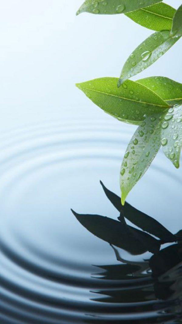 Plant Leaf Leaves Aquatic Background (Turbo Premium Space)