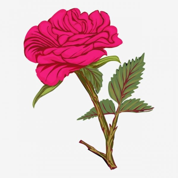 Beautiful Red Rose On A White Background Vector Illustration (Turbo Premium Space)
