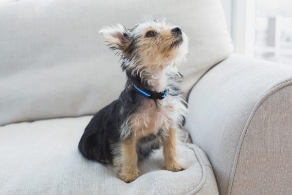 Canine friend 02 (Turbo Premium Space)