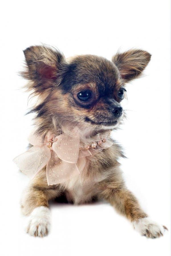 Canine friend BIG (Turbo Premium Space)
