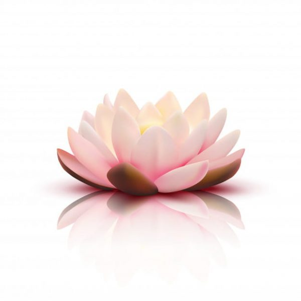 Isolated flower of lotus with light (Turbo Premium Space)