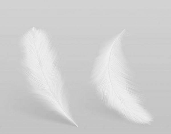 Lying, falling birds clean white, fluffy (Turbo Premium Space)