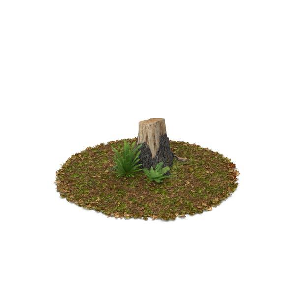 Stump with Ferns (Turbo Premium Space)