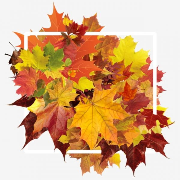 Autumn Leaves Border (Turbo Premium Space)