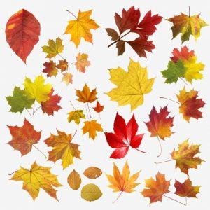 Autumn Tags
