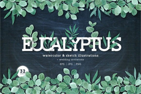 Eucalyptus leaves collection