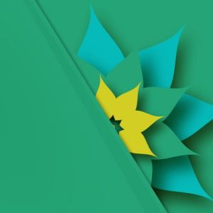 3d Paper Flower On Green Background
