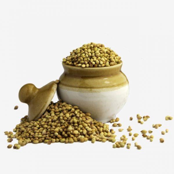 Coriander Seeds In Ceramic Pot