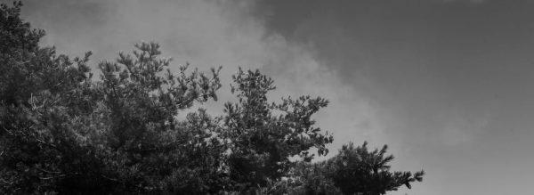 Dreamy Foggy Forest Print Ad (Turbo Premium Space)